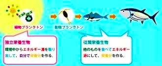 海水魚飼育の疑問解決 用語さ